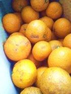 他の写真1: 国産無農薬 甘夏のマーマレード 80ml
